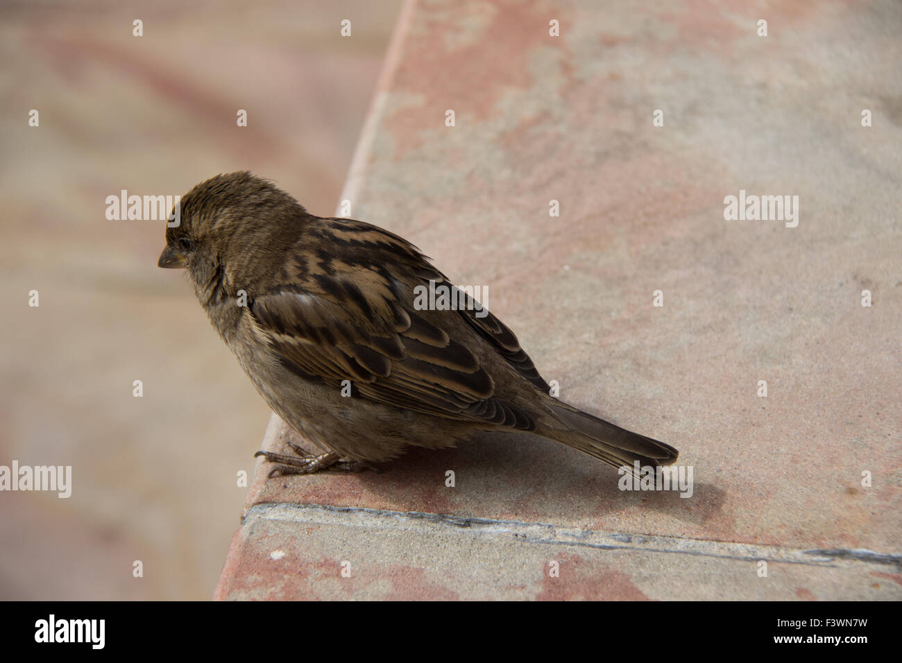 a small brown bird