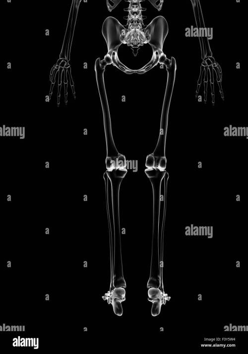 small resolution of medical illustration of the leg bones stock image