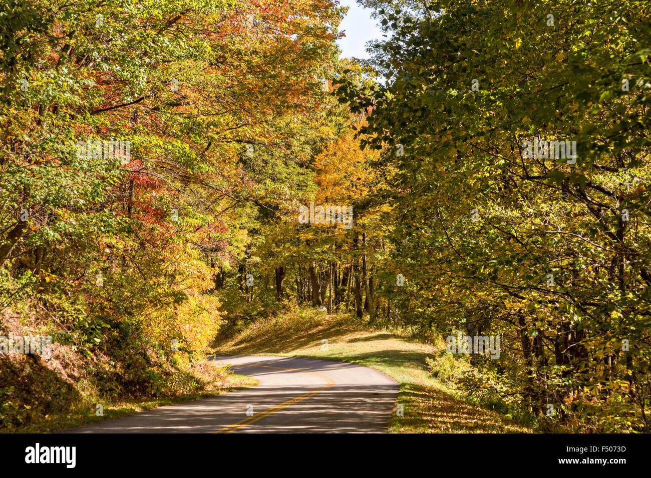 autumn foliage along the