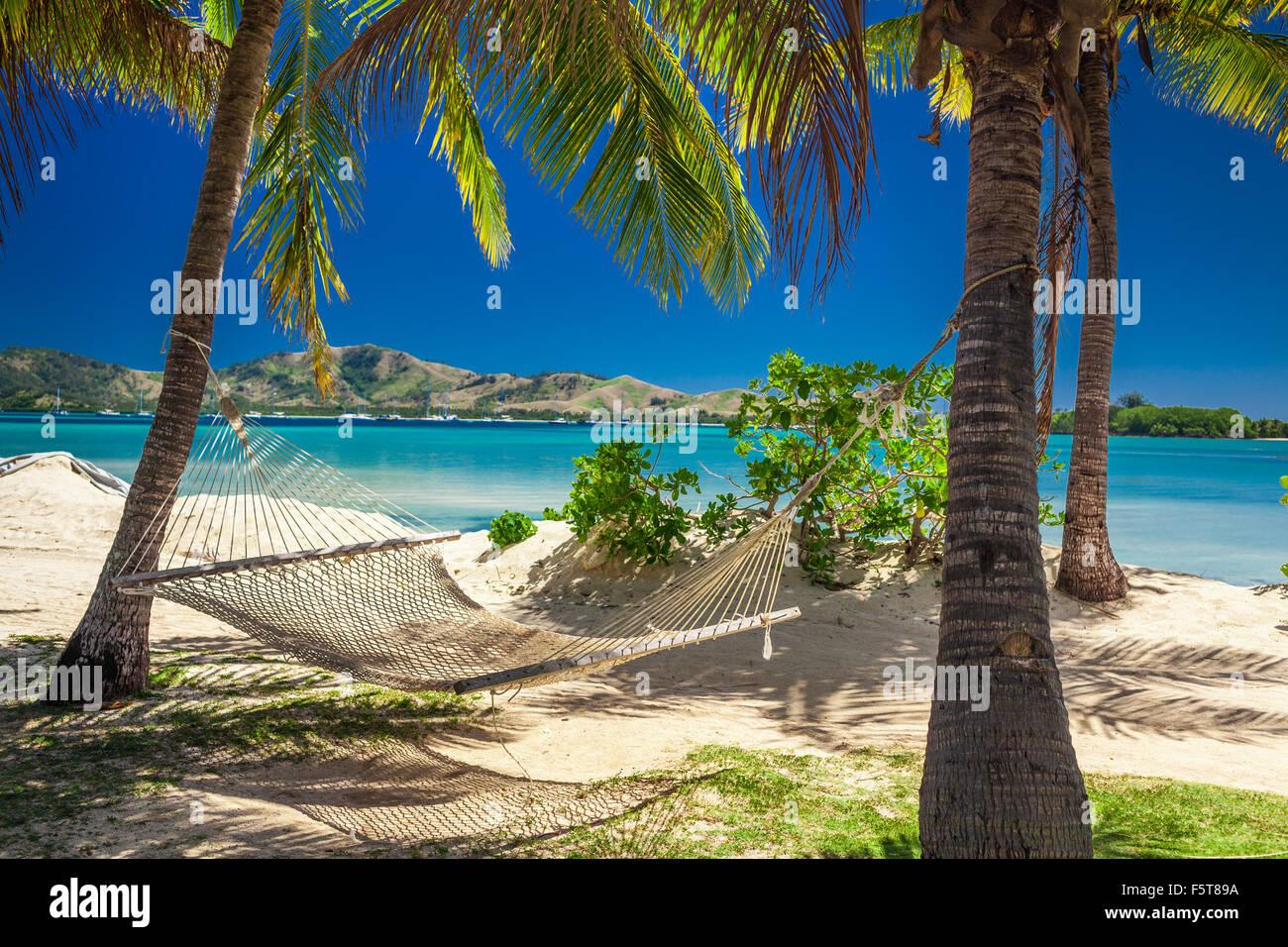 swing chair sri lanka xbox 360 gaming tree on palm beach stock photos and