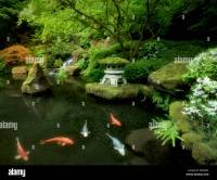 Koi in pond with Japanese lantern and waterfalls. Japanese ...