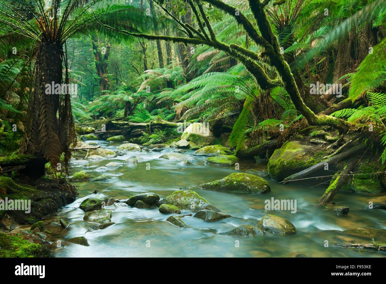 Beautiful Rainforest Pics