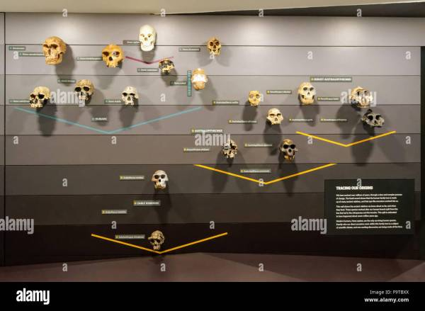 Human Evolution Natural History Museum In