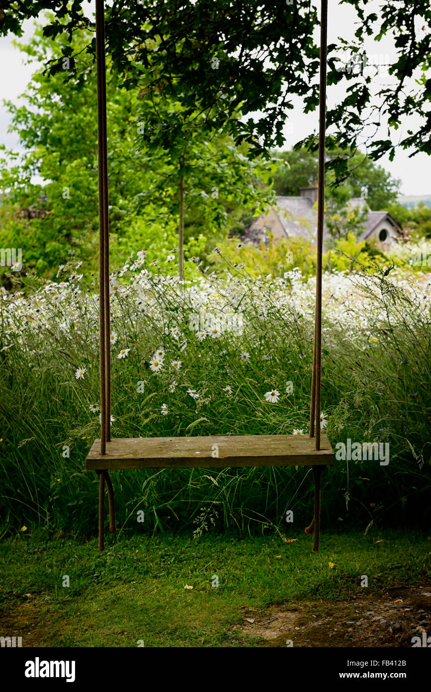 hanging tree swing chair ergonomic nigeria empty seat hang garden park parkland flower stock flowers flowering summer