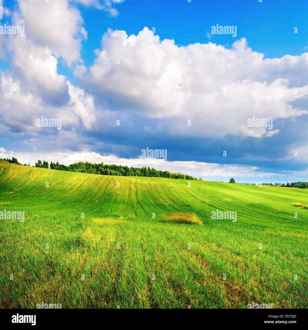 Landscape With Bright Green Grass And Cumulus Clouds. Sunny Summer Stock Royalty Free