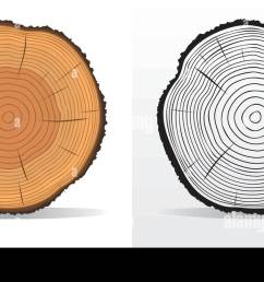 vector illustration of tree rings textures and saw cut tree trunk [ 1300 x 740 Pixel ]