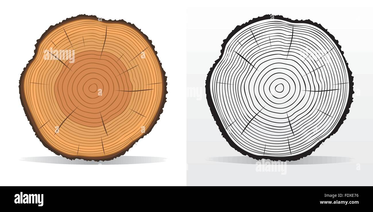 hight resolution of vector illustration of tree rings textures and saw cut tree trunk