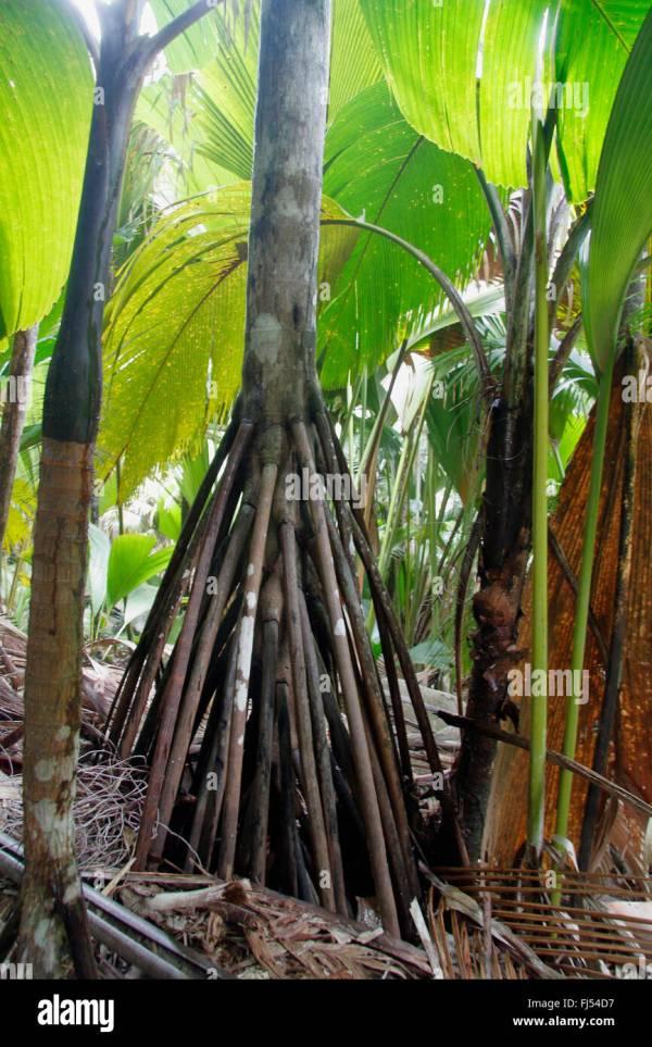 Seychelles National Parks Stock &