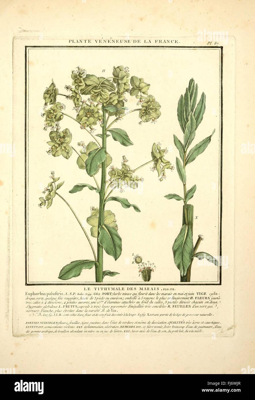 Herbier De La France Pl 87 Stock Photo 97267487 Alamy
