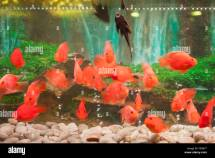 Fish Tank Stock & - Alamy