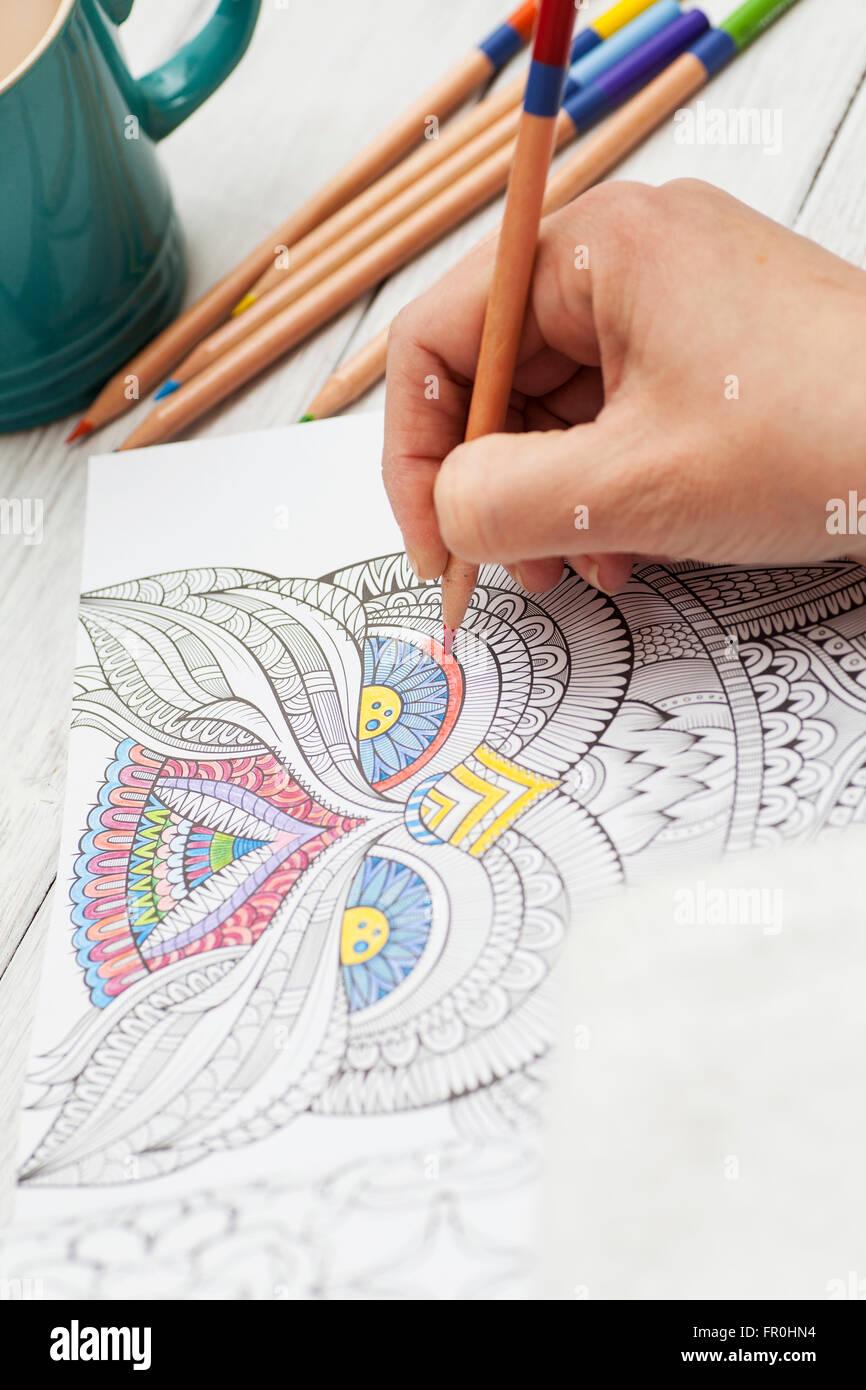 Crayola Adult Crayons : Target
