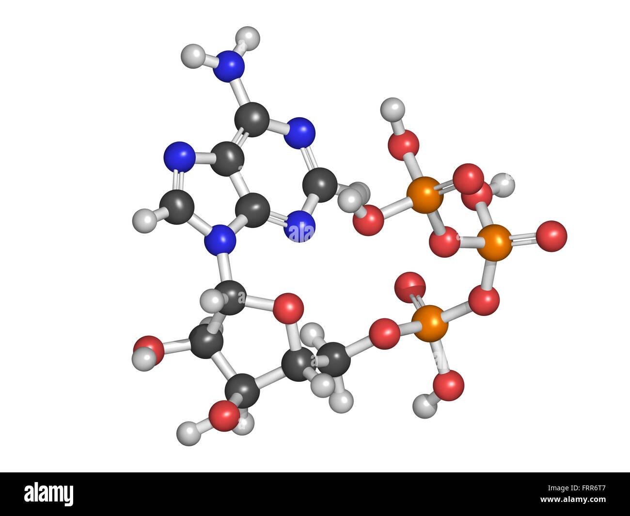 adp molecule diagram labeled suzuki cultus car electrical wiring atp stock photos and images alamy