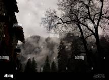 Creepy Tree Stock & - Alamy