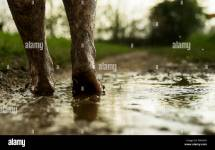 Muddy Feet Stock & - Alamy