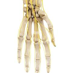 Hand Nerves Diagram Wiring For Electric Fan Human Illustration Stock Photos Computer Image