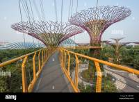 The Super Trees from the Walkway in Gardens by the Bay ...