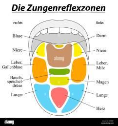 tongue reflexology chart german labeling with description of the corresponding internal organs  [ 1300 x 1390 Pixel ]