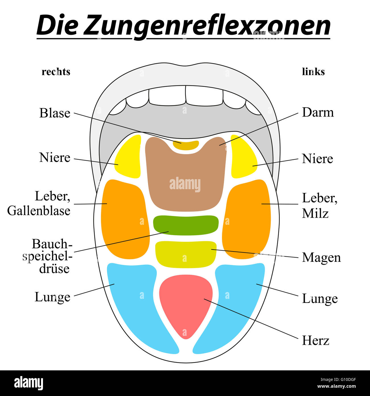 hight resolution of tongue reflexology chart german labeling with description of the corresponding internal organs