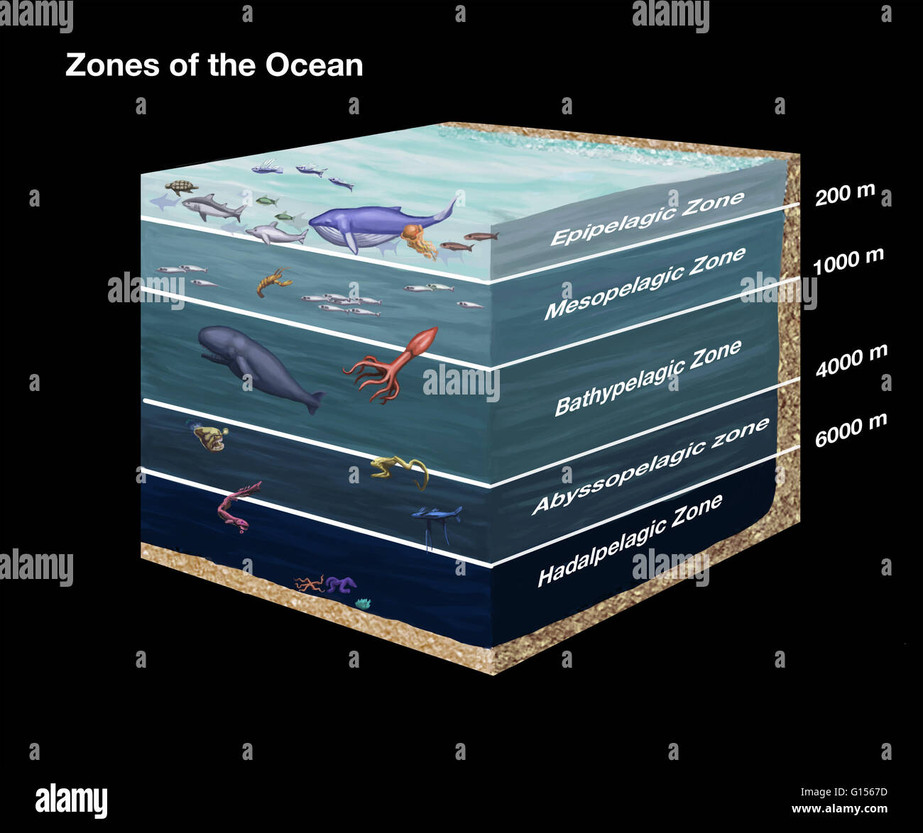 ocean floor diagram drawing solid mensuration formulas with diagrams cross sectional showing zones of the from
