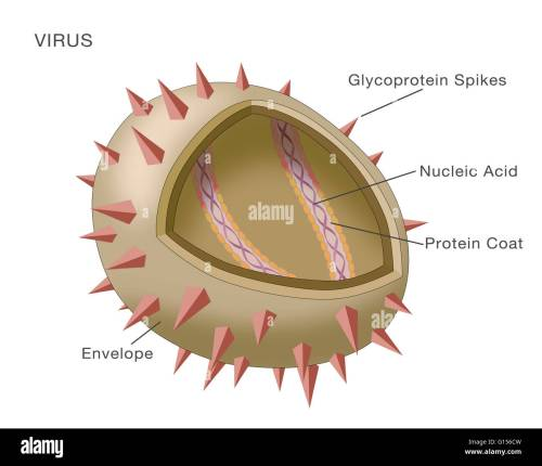 small resolution of diagram showing the structure of a typical virus virus particles or virions generally consist of two or three parts the genetic material made from