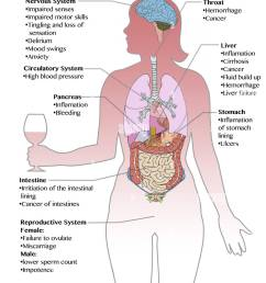 diagram showing the long term effects of excess alcohol consumption stock image [ 1000 x 1390 Pixel ]