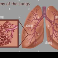 Lung Diagram Drawing Ceiling Fan Wiring Separate Switches Illustration Of The Anatomy Lungs, With A Close-up Stock Photo: 103991749 - Alamy