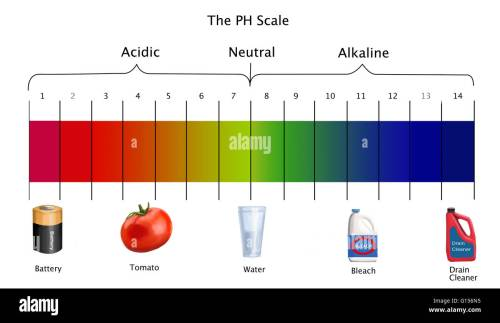 small resolution of diagram of the ph scale with examples of acidic neutral and diagram of phases of meiosis diagram of ph