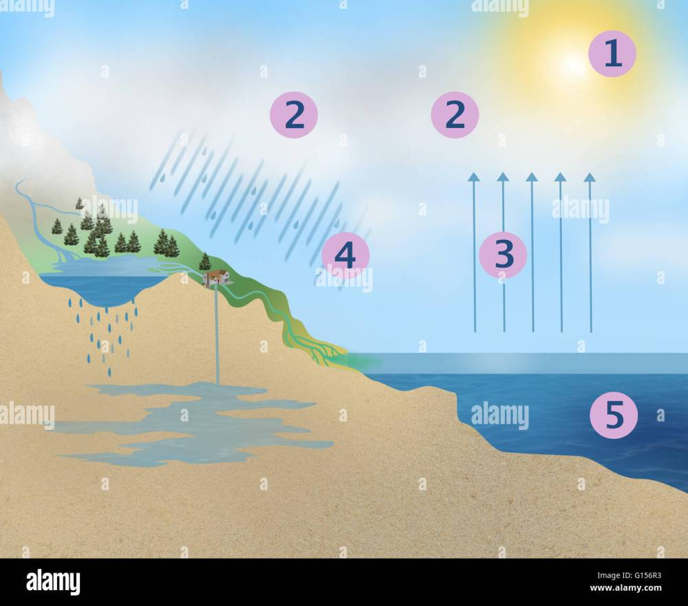 medium resolution of illustration of the earth s water cycle in 5 steps 1 condensing water vapour 2