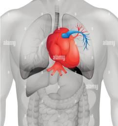 human heart diagram in detail illustration stock image [ 1056 x 1390 Pixel ]