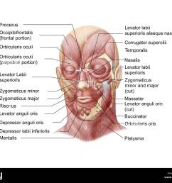 facial muscles of the human face with labels  [ 1300 x 1090 Pixel ]