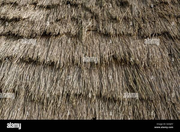 Texture Thatched Palm Leaf Roof Stock I3267962 - Year of