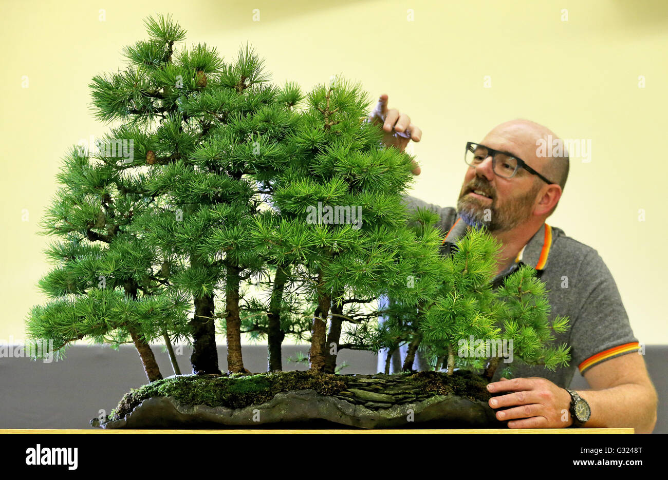In case you're missing the forest for the trees, here are a few reminders why woodlands are wonderful. Page 2 Bonsai Trees Exhibition High Resolution Stock Photography And Images Alamy