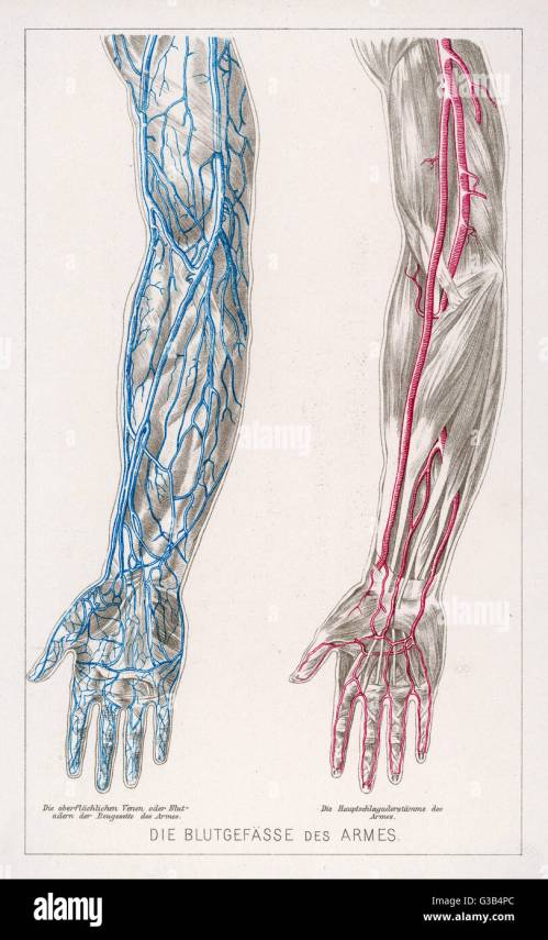 small resolution of diagram to show the network of veins and arteries in the arms