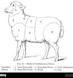 diagram of a sheep showing the various cuts date nineteenth century [ 1300 x 1275 Pixel ]