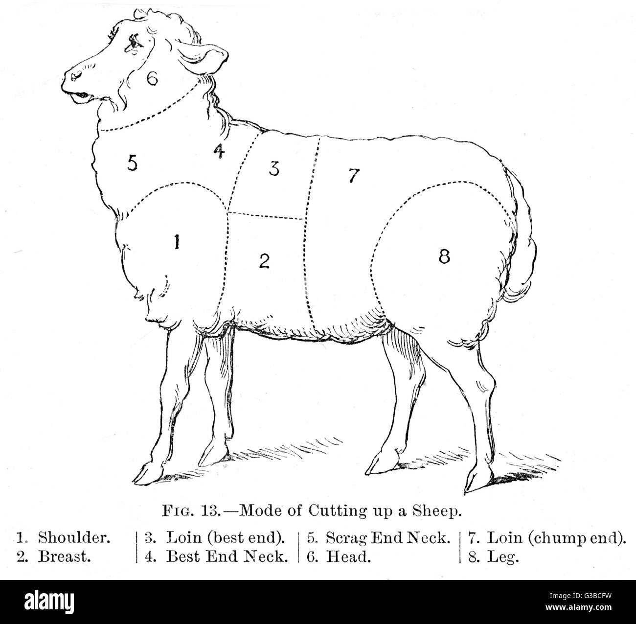 hight resolution of diagram of a sheep showing the various cuts date nineteenth century
