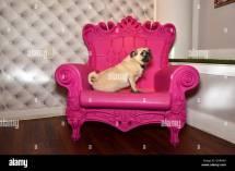 Pet Hotels Chelsea Manhattan York Usa Pug Pink