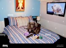 Pet Hotels Chelsea Manhattan York Usa Great Dane