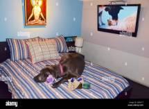 Pet Hotels Chelsea Manhattan York Usa Stock