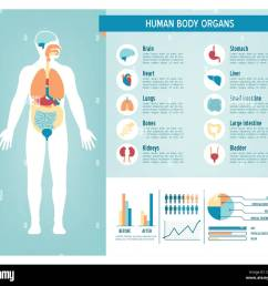 human body health care infographics with medical icons organs charts diagarms and [ 1300 x 1188 Pixel ]