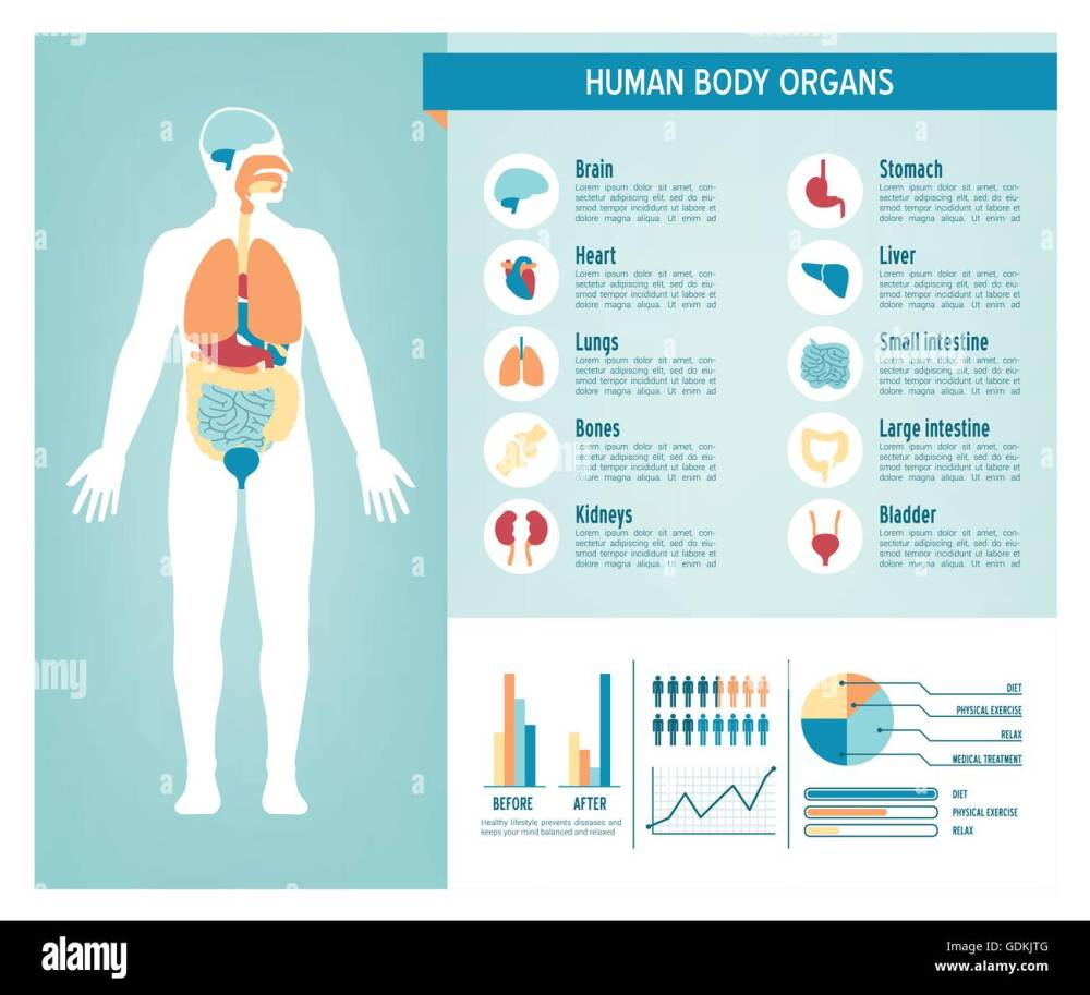 medium resolution of human body health care infographics with medical icons organs charts diagarms and