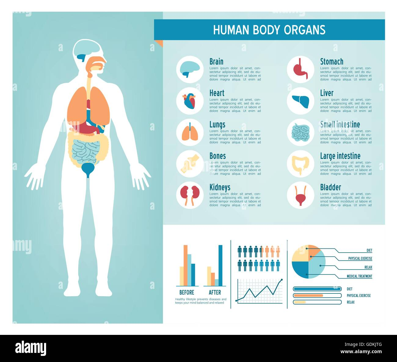 hight resolution of human body health care infographics with medical icons organs charts diagarms and