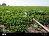 Irrigation Pipe Stock Photos & Irrigation Pipe Stock ...