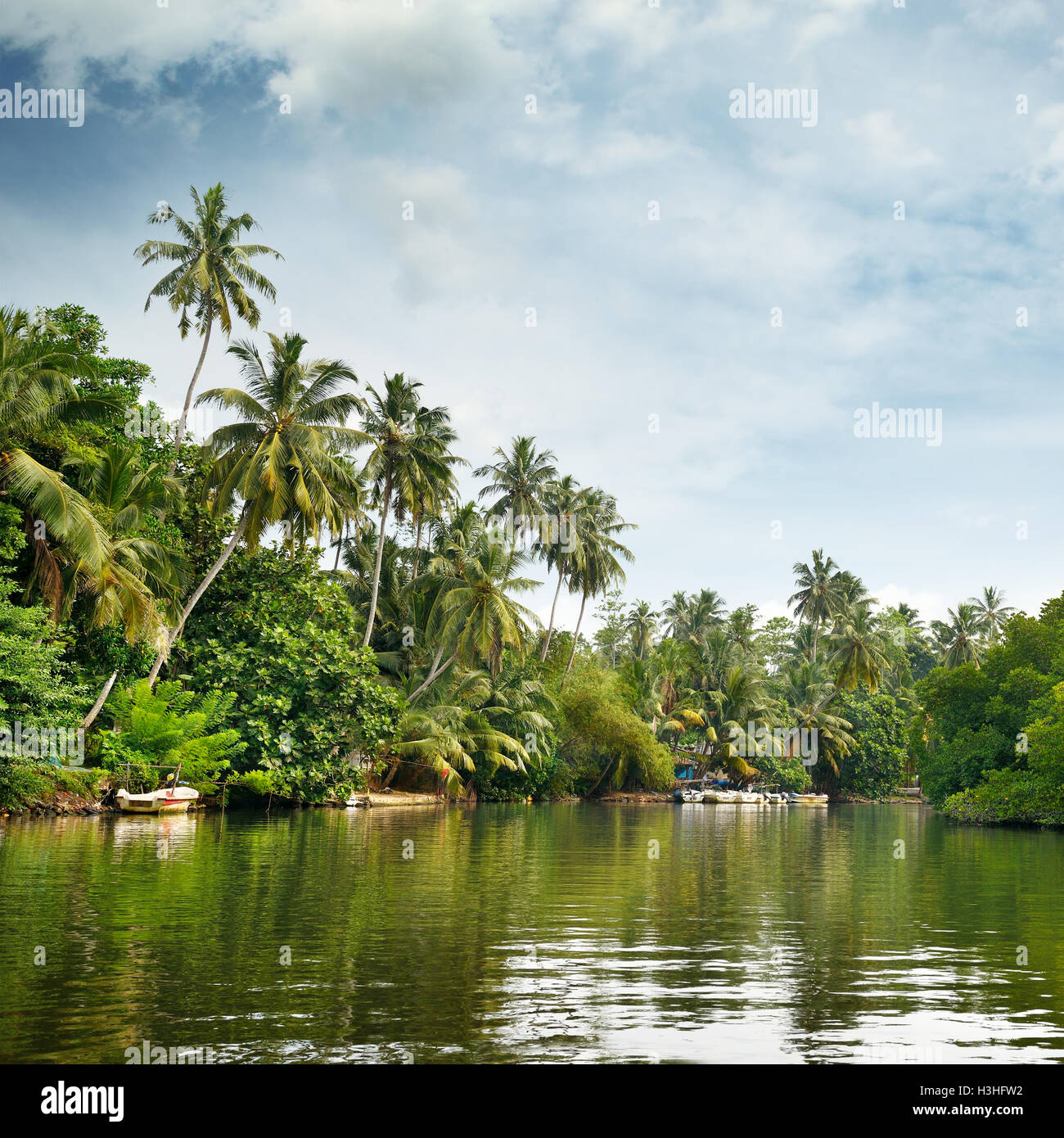 129.5 x 162.5 cm (51 x 64 in. Equatorial Forest High Resolution Stock Photography And Images Alamy