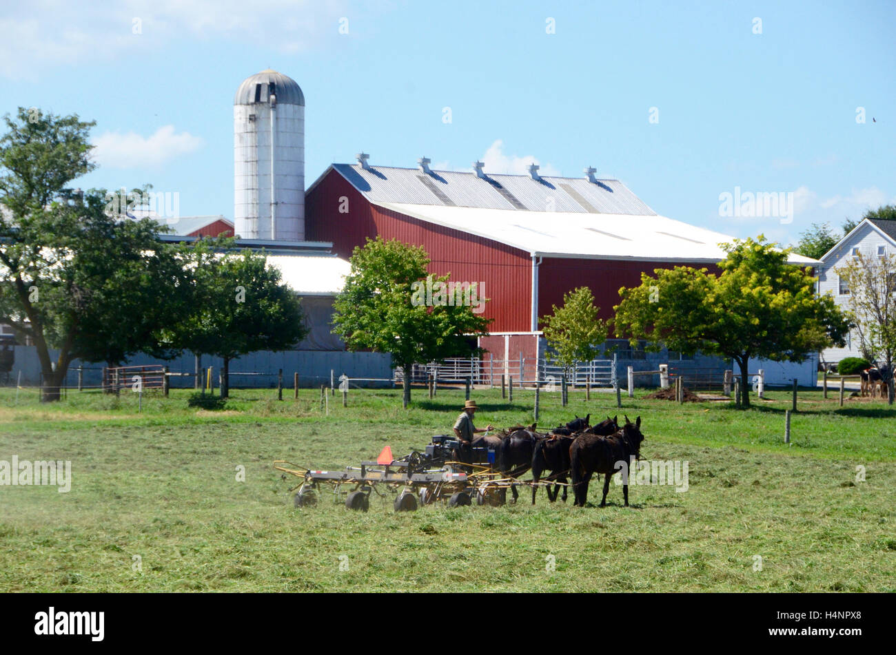 An Amish farmer working with horses in Lancaster County