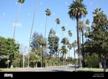 Beverly Hills Palm Trees Stock