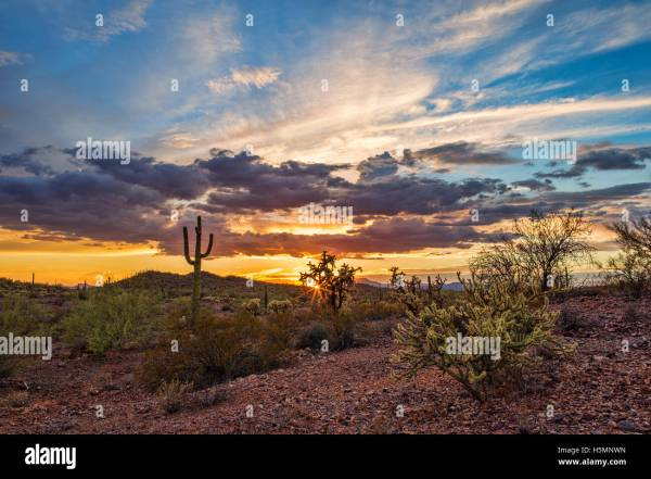 colorful sunset over sonoran