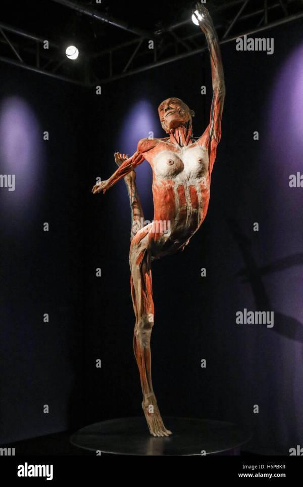 Bodies Exhibition Stock & - Alamy