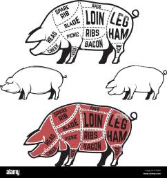 butcher diagram scheme and guide pork cuts set of pig silhouettes isolated on [ 1300 x 1386 Pixel ]
