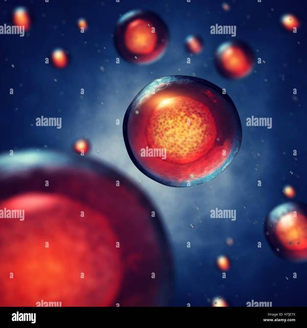 Blastocyst Stock & - Alamy