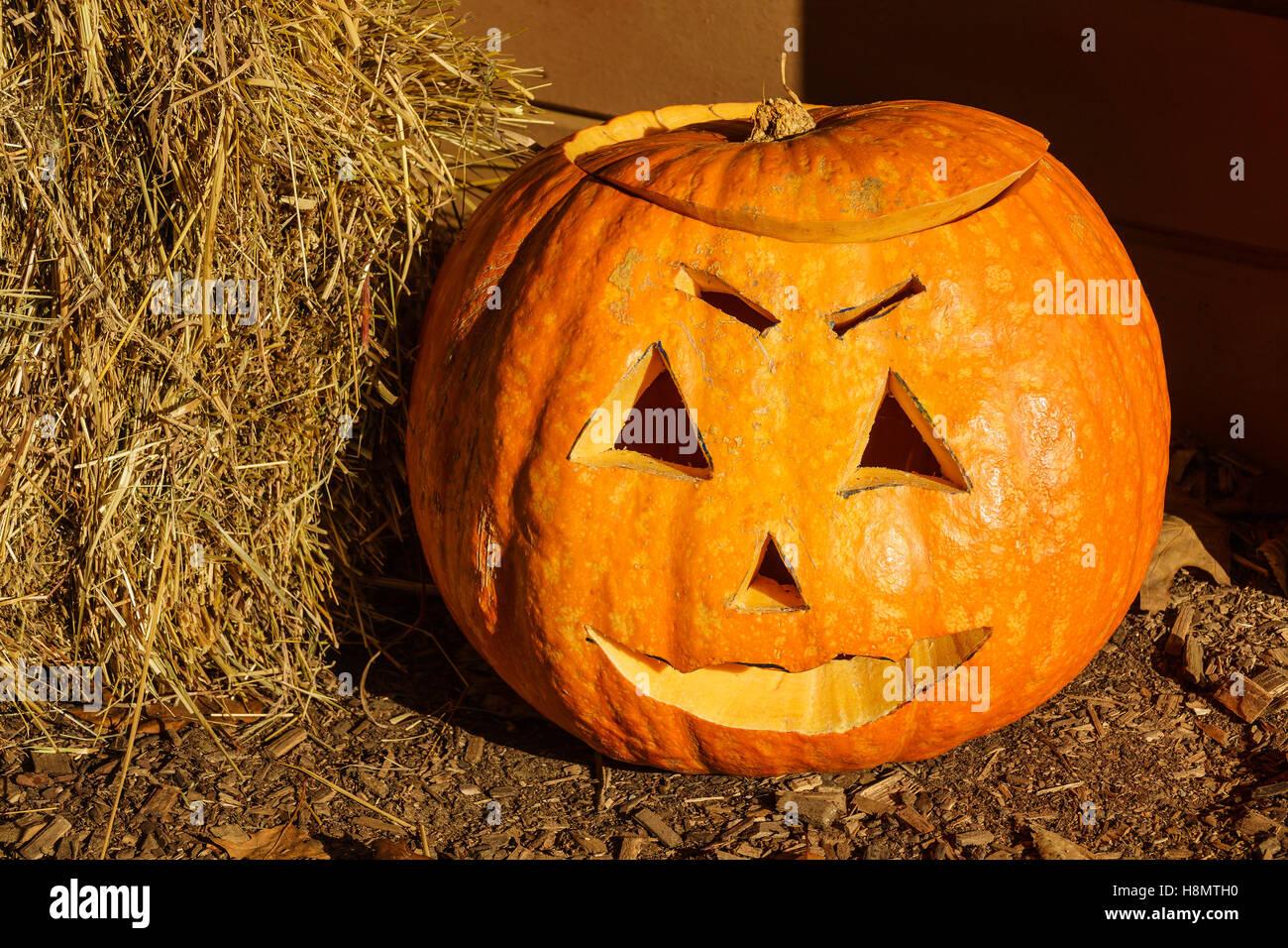 orange pumpkin with face
